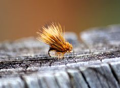 Deer Hair Caddis, Dry Fly, Fly Fishing Fly, Fly Fishing Flies, Caddis Fly, Fishing Lure, Fishing Bait, Fishing Gift, Trout Fishing, Fish by WhiskeyRiverFlies on Etsy https://www.etsy.com/listing/273399500/deer-hair-caddis-dry-fly-fly-fishing-fly