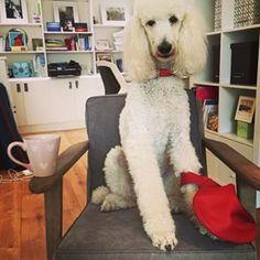 At a friend's for tea. xx, bija #accessories #bag #bija #bijabags #color #dog #doglove #dogs #handbags #hangingout #meetingup #friends #hangin #organic #organictea #peaceful #uplifting #seed #dogssitting #dogsonchairs #teatime #friendtime #bestfriends #visiting #gossip #chatting