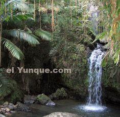 Puerto Rico- rainforest hikes, waterfalls, night kayak to bioluminescent lagoon, caves to explore, and beaches.