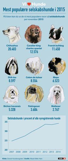 Danske hunde-ejere er vilde med de helt små hunde | Ligetil | DR