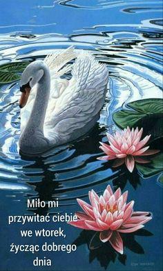 Swan and water lilies Beautiful Swan, Beautiful Birds, Animals Beautiful, Swan Painting, Painting & Drawing, Image Nature, Wildlife Art, Swans, Illustrations