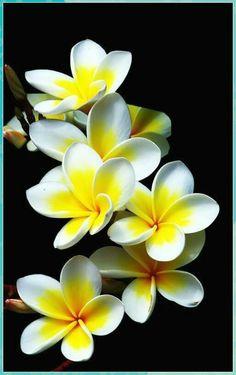 Beautiful Flowers Wallpapers, Most Beautiful Flowers, Exotic Flowers, Tropical Flowers, Pretty Flowers, Purple Flowers, Pink Roses, Tropical Garden, Unique Flowers