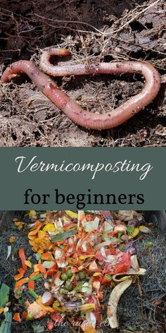 Make rich fertilizer no matter where you live! Here's what vermicomposting is, and how to get started!!