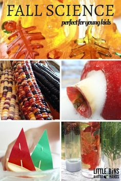 fall activities for kids I just love fall and fall science activities. The season is changing with beautiful leaves. There are acorns and nature to explore! The smells are amazi Fall Activities For Toddlers, Fall Preschool, Nature Activities, Preschool Science, Preschool Activities, Preschool Seasons, Harvest Activities, Preschool Apples, Bears Preschool