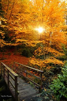 }{ ~~The Secret Garden ~ a magical autumn walk by MyLifeThroughTheLens~~ Fall Pictures, Fall Photos, Nature Photos, Beautiful World, Beautiful Places, Autumn Walks, Autumn Scenes, All Nature, Amazing Nature