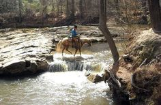 If you've ever thought about going horseback riding in Louisiana, consider visiting Kisatchie National Forest.