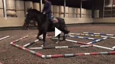 """""""How elegant!"""" These horses master the pole course with flying colors! Dressage, Horse Arena, Horse Exercises, Welsh Pony, Chestnut Horse, Riding Lessons, Horse Tips, Horse Quotes, Horse Stalls"""
