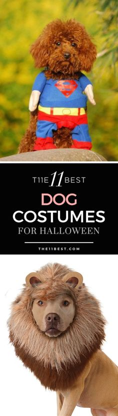 These Halloween dog costumes just need to happen!