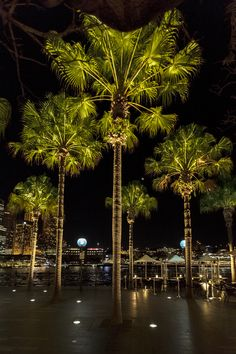landscape lighting design A stroll along Circular Quay offers not only a view of the Sydney Opera House, it also leads you past palm trees. Bathed in ERCO light, these have an Outdoor Tree Lighting, Garden Lighting Diy, Park Lighting, Outdoor Trees, Lighting Ideas, Outdoor Spaces, Palm Tree Lights, Palm Trees, Landscape Lighting Design