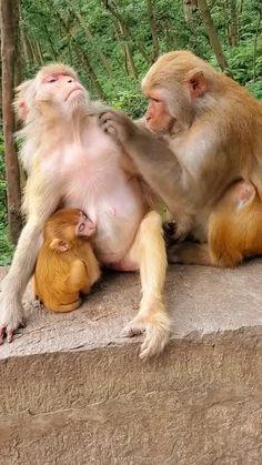 Cute Wild Animals, Super Cute Animals, Cute Funny Animals, Animals And Pets, Cute Baby Monkey, Pet Monkey, Baby Animal Videos, Funny Animal Videos, Mundo Animal
