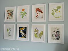 DIY Botanical Prints - I recently took a trip to our local thrift stores and flea markets just for something to do and came out with an eclectic collection of b…