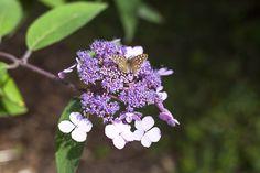 Butterfly, Westonbirt Arboretum and Burford, England