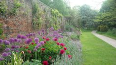 Alliums in the south border