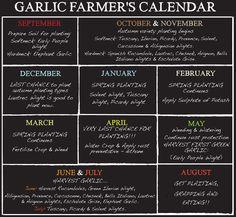 Grow Garlic yourself in the UK - The Garlic Farm for all things garlic Fruit Garden, Edible Garden, Vegetable Garden, Garden Plants, Growing Greens, Growing Veggies, Garlic Farm, Grow Garlic, Gardens