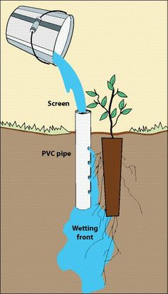 An intelligent deep #irrigation system for plant using pvc pipe.