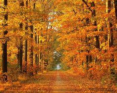 Tree Lined Road Autumn wallpaper by paxlynx2, via Flickr
