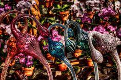 Atlanta Botanical Gardens – Barbara Youngleson's PhotoBlog   Fine ...