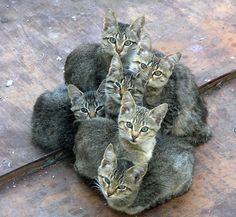 Cat huddle