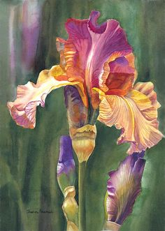 Iris On The Warm Side Painting by Sharon Freeman - Iris On The Warm Side Fine Art Prints and Posters for Sale