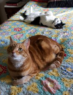 Orange tabby cat, white and black cat