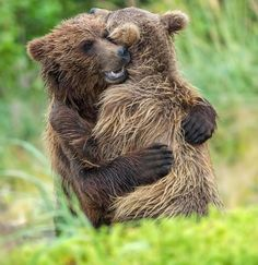 A hug between two young grizzly bears was caught on camera in the Alaskan wilderness