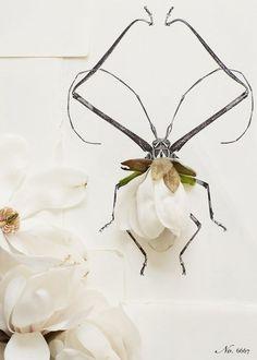 3D art, flower + drawing, by Kari Herer.