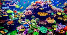 Coral Reef and Tropical Fish (Shutterstock www.shutterstock.com)