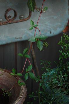 my garden Leaves