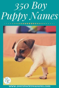 Hello pet lovers, dog lovers Are you a new pet owner? Did you just get a cute puppy or cute dog? Congrats! I created a list of unique dog names male list. You are welcome to have my wonderful list of dog names boy unique list. This list is also for dog male names for puppies. They are super cute puppy names male. I love these male dog names / dog boy unique list.#puppy #puppynames #names #dognames #dog #doglove Cute Male Dog Names, Boy Puppy Names, Unique Cat Names, Super Cute Puppies, Cute Dogs, Pet Loss Grief, Famous Dogs, Dog List, Cat Memorial