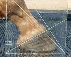 The Horse's Hoof: Hoof Angles