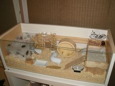 """Ikea BILLY """"shelf extension"""" cage instructions for dwarf hamsters Syrian Hamster Cages, Dwarf Hamster Cages, Robo Dwarf Hamsters, Cool Hamster Cages, Robo Hamster, Gerbil Cages, Hamster Life, Hamster Habitat, Hamster Stuff"""
