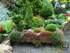 Michael Larkin (from Michael Larkin Garden Design) discusses planting conifers in containers. He has captured some great images from an Oregon nursery. I like the use of succulents in this design. Garden Design, Dwarf Conifers, Vegetable Garden Design, Plants, Miniature Garden, Pinterest Garden, Conifers Garden, Garden Troughs, Garden Containers