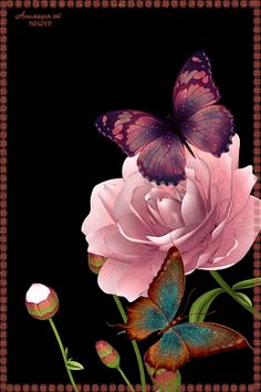 With Tenor, maker of GIF Keyboard, add popular Flowers animated GIFs to your conversations. Share the best GIFs now >>> Butterfly Gif, Butterfly Pictures, Butterfly Wallpaper, Butterfly Kisses, Orange Butterfly, Beautiful Gif, Beautiful Roses, Beautiful Butterflies, Pretty Flowers