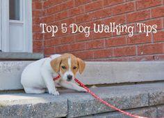CollarsCollars Blog: Top 5 Tips for Walking Your Dog