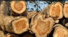 Wood is a porous and fibrous structural tissue found in the stems and roots of trees, and other woody plants. It has been used for thousands of years for both fuel and as a construction materia