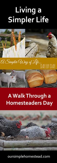 "Living a Simpler Life - ""The smell of freshly baked bread, a simple walk to the mailbox and laundry drying in the sun are just a few things that keep me grounded to a simpler way of life."""