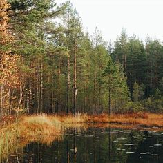 ~pond in the pines