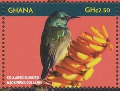 Collared Sunbird stamps - mainly images - gallery format