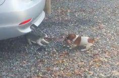 The Ultimate Tug-Of- War Match: Puppy Vs Kitten http://viralselect.com/the-ultimate-tug-of-war-match-puppy-vs-kitten/  #cat #Dog #Kitten #Puppy #Tug-of-war #ViralVideo