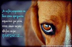 Kindness To Animals, My Best Friend, Best Friends, Greek Quotes, Love Words, Animal Kingdom, Animals And Pets, My Eyes, Dogs