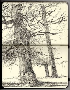 Winter Oaks, Richmond, Ian Sidaway - Fine Line Artist Journal, Artist Sketchbook, Sketchbook Drawings, Drawing Sketches, Art Drawings, Kunstjournal Inspiration, Sketchbook Inspiration, Illustrations, Illustration Art