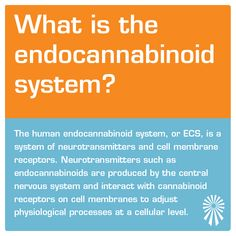 We answer common questions regarding CBD, and provide upfront information about cannabinoids in these easy to understand FAQs. CBD Information Psychiatric Medications, Endocannabinoid System, Cellular Level, Cell Membrane, Central Nervous System, Neurotransmitters, Hemp, Knowledge, Medical