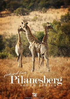 Sun City Casino Resort, Pilanesberg National Park – South Africa Bucket list my birthday Oh The Places You'll Go, Cool Places To Visit, North West Province, African Holidays, Out Of Africa, The Beautiful Country, Lost City, African Safari, Africa Travel