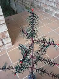 Image result for tutorial how to make a wool feather tree