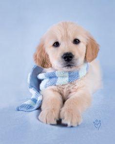 esse cachorrinho é muito fofo