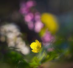 Spring by Irén Udvarházi on 500px