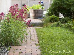Spornblumen Hungerkünstler und Wunderblume zugleich