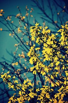 Leaf It At That  by Caleb Troy