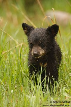 grizzly bear cub - Google Search Grizzly Bear Cub, Bear Cubs, Bears, Black Bear, Squirrel, Best Friends, Horses, Google Search, Nature