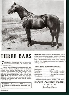 Three Bars. My horses's great-grandfather    Google Image Result for http://www.nunnie.com/3bars13.jpg